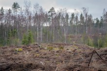 Skogen efter
