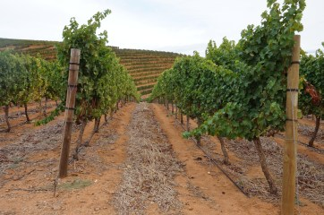 Delaire Graff vineyards