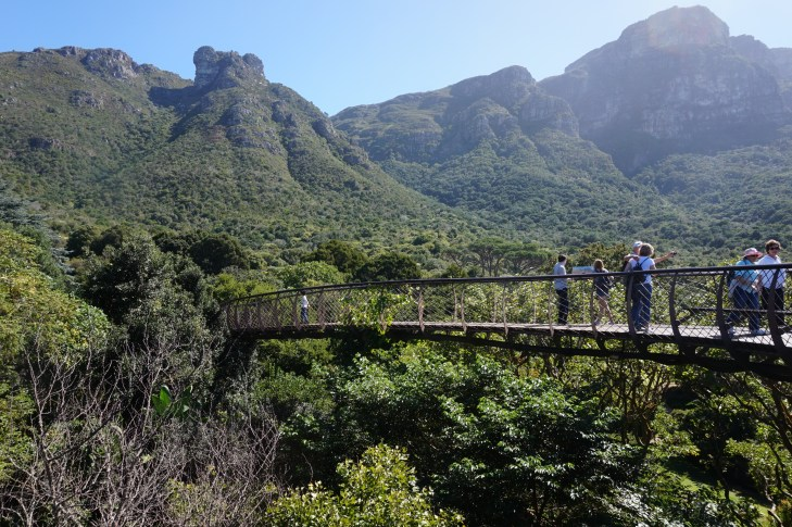 Boomslang walkway at Kirstenbosch Botanical Gardens in Cape Town