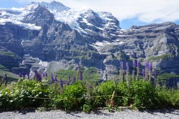 Along the trail to Kleine Scheidegg