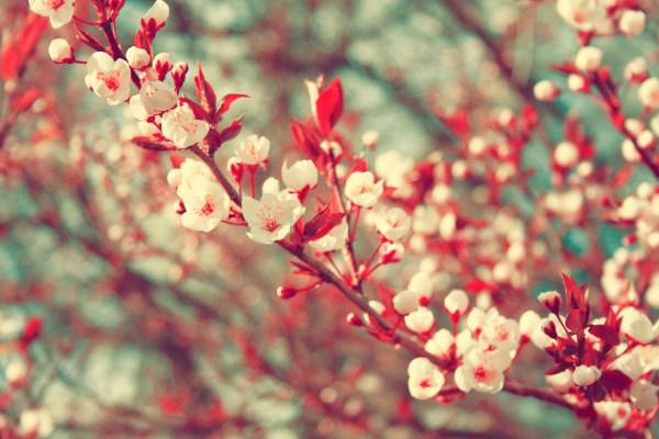 bahar çiçek