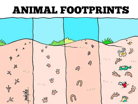 funny-animal-beach-dirty-footprints