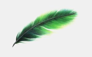 feather - pena em ingles