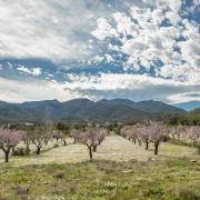 La catalana Borges busca 30 millones en bolsa para sembrar almendros en el sur