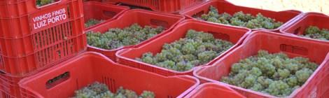 Vinhas Gerais: um tour pelas vinícolas do Sul de Minas