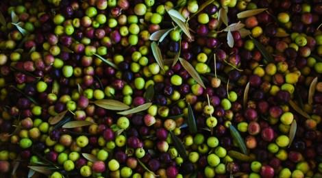 Azeites da Serra da Mantiqueira