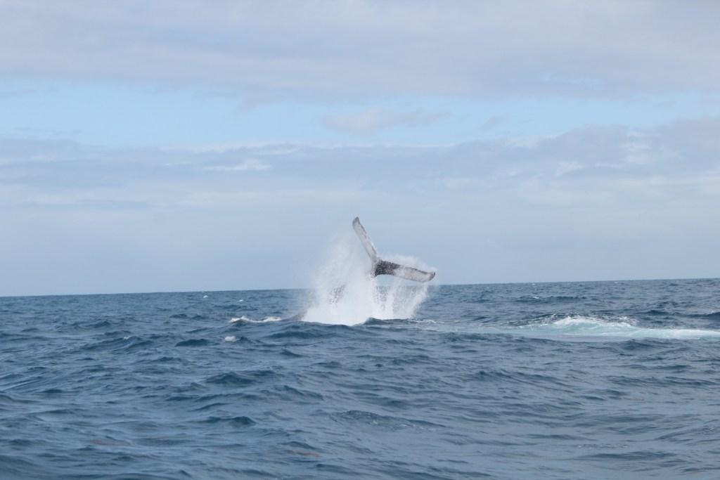 Observação das Baleias, Prado-BA | foto: Ingrediente da Vez