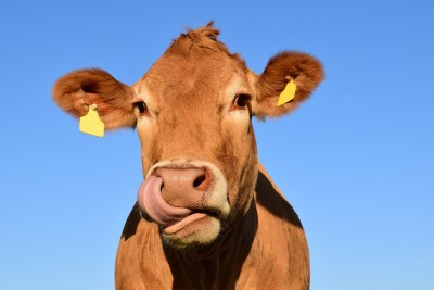heatwave leads to feed shortage