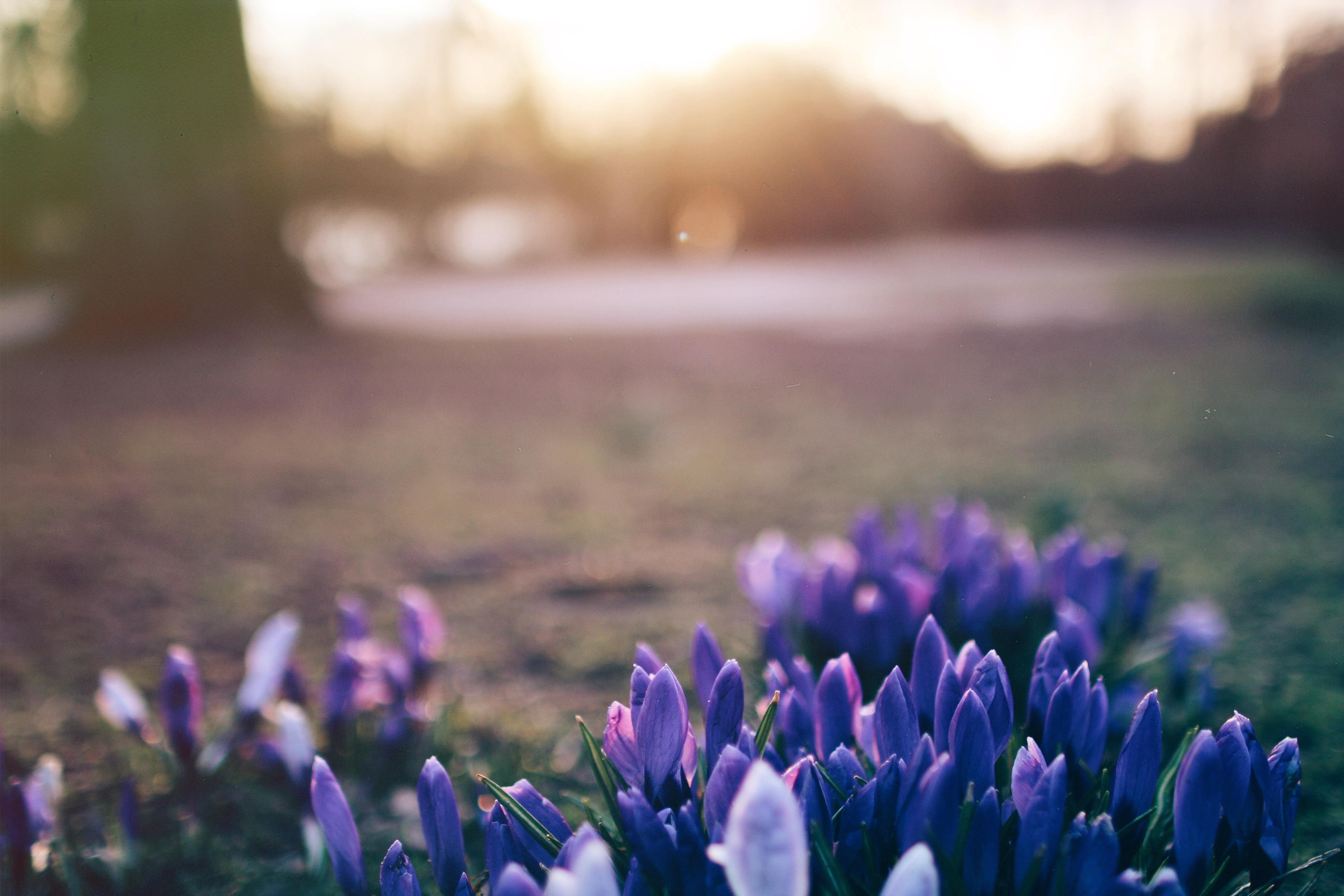 Fotos Frühling