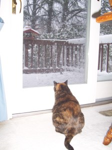 snowy-birdwatching-006