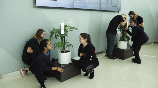 What-happens-when-you-bully-an-IKEA-plant-5af02cb4613c5__700