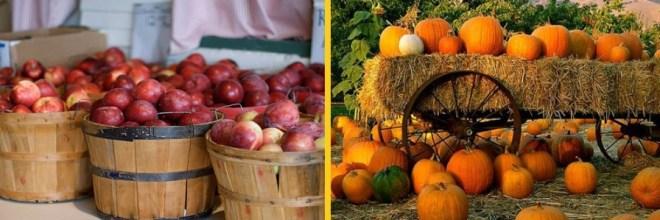apple-pumpkin-header