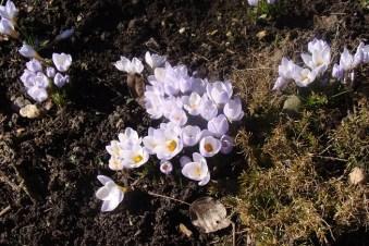 floksbed forår2