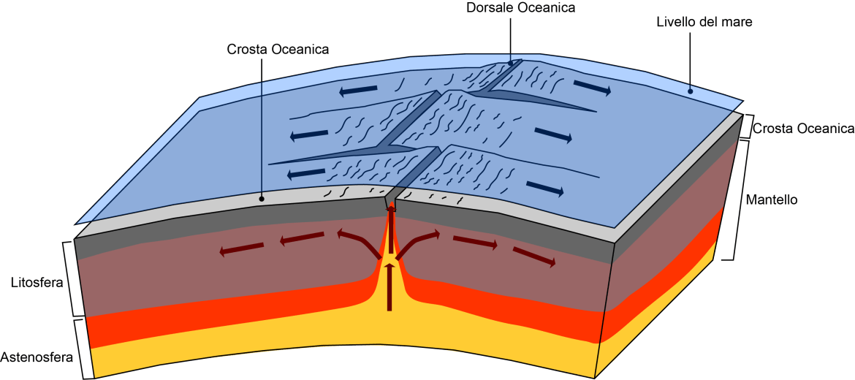 dorsali