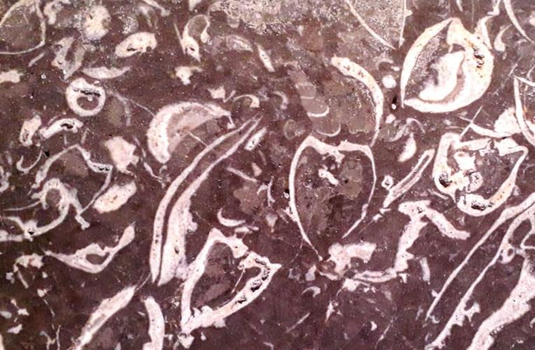 Frammenti di geologia urbana: il Calcare a Lithiotis di Palazzo Gravina, a Napoli