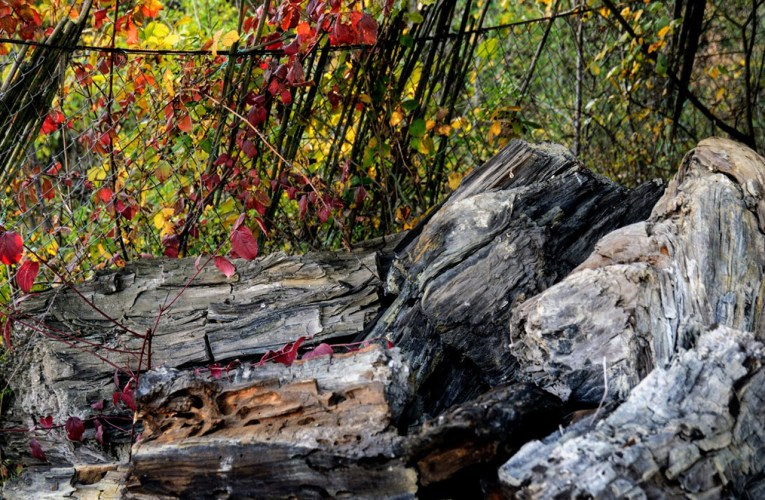 Frammenti di geoscienze: la Foresta Fossile di Dunarobba