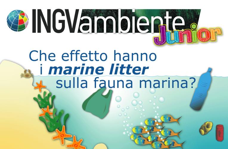 Che effetto hanno i marine litter sulla fauna marina?