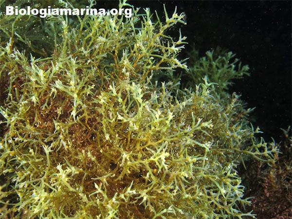 alghe2