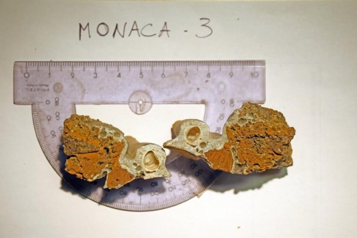 Goethite su concrezione di grotta, dalla miniera Paleolitica della Grotta della Monaca, sant'Agata d'Esaro, foto Laura Alfonsi