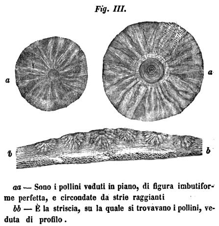 """Figura rappresentante i """"vulcanetti"""" di fango dovuti alla liquefazione (Pilla, 1846b)."""