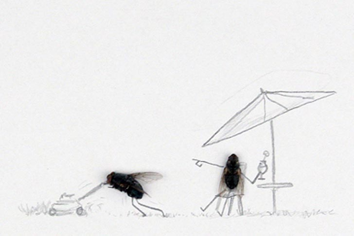 Magnus Muhr Uses Dead Flies to Make Fun of Humans