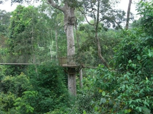 west african forests capture