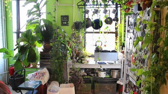 Brooklyn Apartment Transformed into Greenhouse Filled with Over 200 Plants  Inhabitat  Green