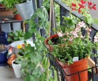 DIY: How to Plant a Personal Garden In a Small Urban Space ...