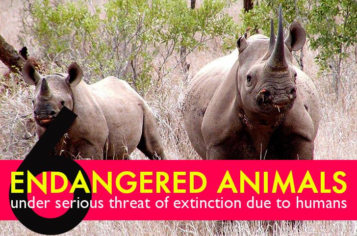 6 critically endangered animals