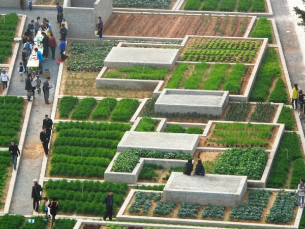 colossal green farm flourishes