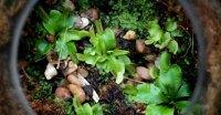 Carnivorous Plants Terrarium  Inhabitat  Green Design ...