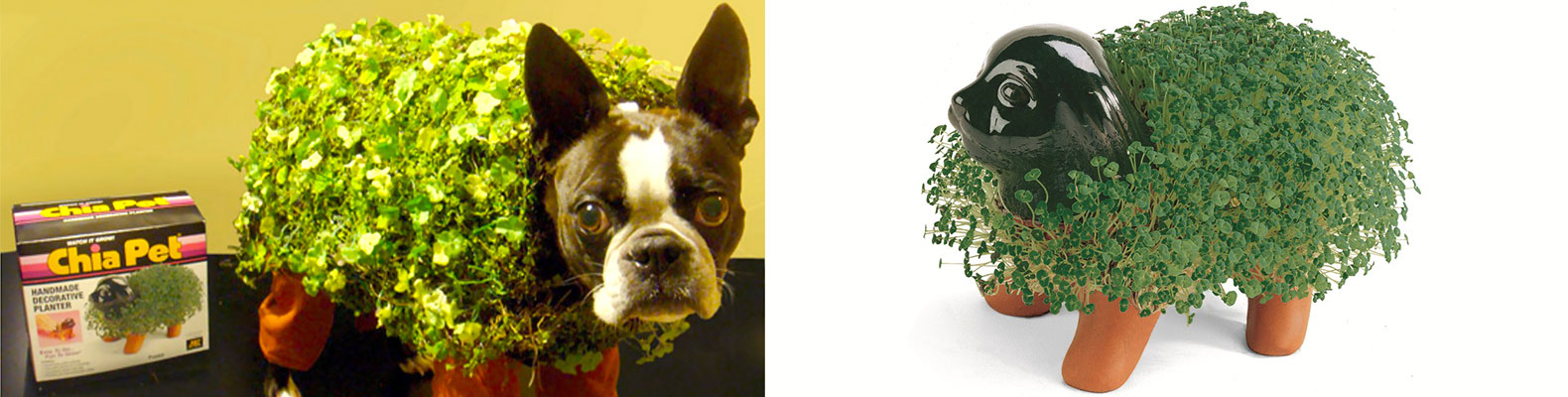 DIY: How to make an adorable Chia Pet dog costume for