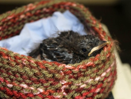 wildlife rescue nests, rescuing wildlife, abandoned baby birds, abandoned baby wildlife, helping abandoned wildlife, ecouterre, baby bird rescue, knitting projects, crochet projects