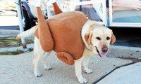 10 Adorable DIY Halloween costumes for pets | Inhabitat ...