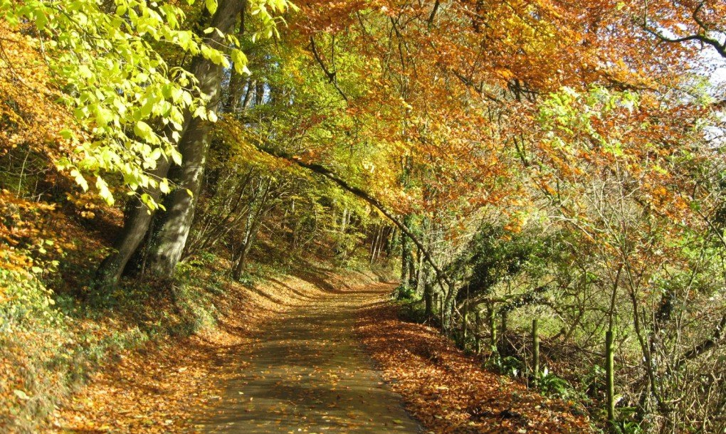Benefits Mulching Leaves Lawn