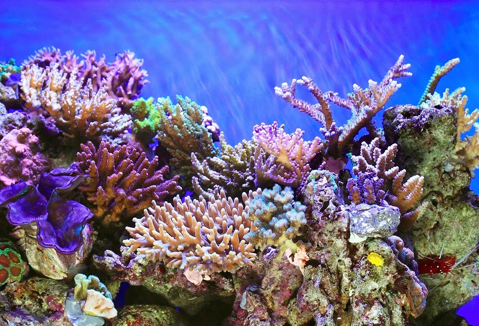 Coral Reef Inhabitat