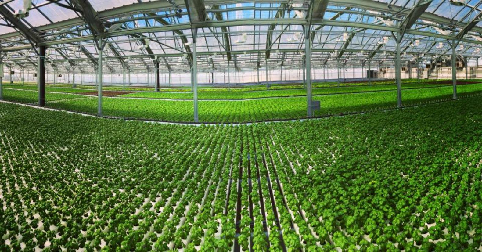 New Fresh York Farm