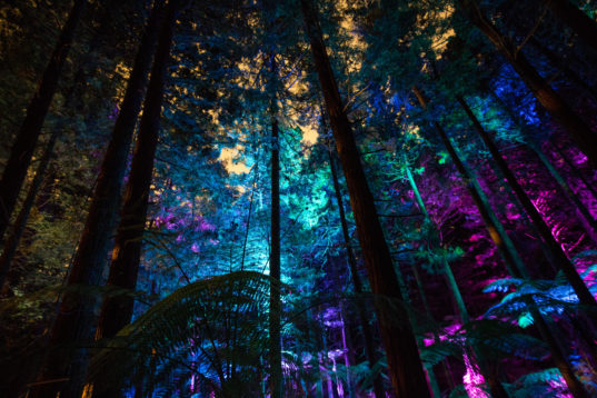 Fall Wood Wallpaper David Trubridge Lights Up A Magical Redwood Tree Walk In