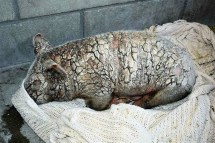Animal Cruelty Inhabitat - Green Design Innovation