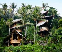 Bamboo Architecture Design Houses