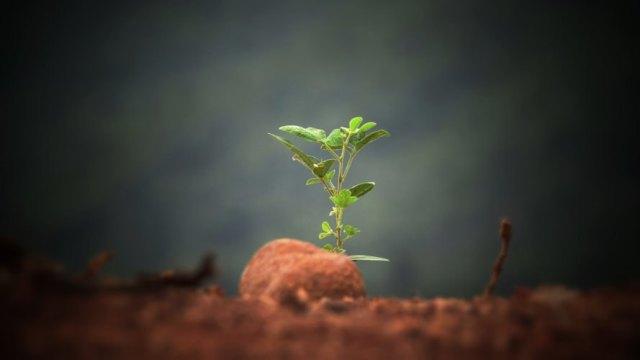 Plant, plants, seedling, seedlings, soil, dirt, nature