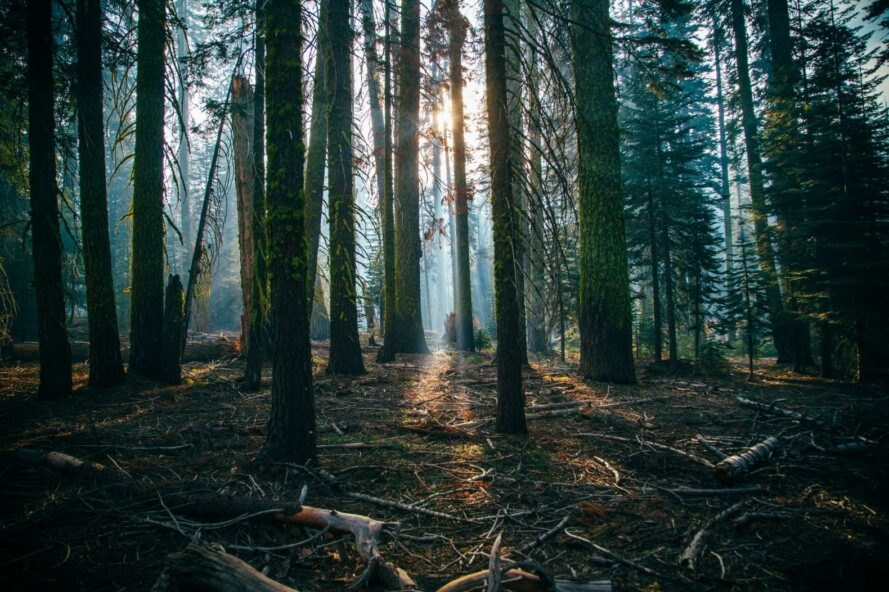 why reforestation isn t
