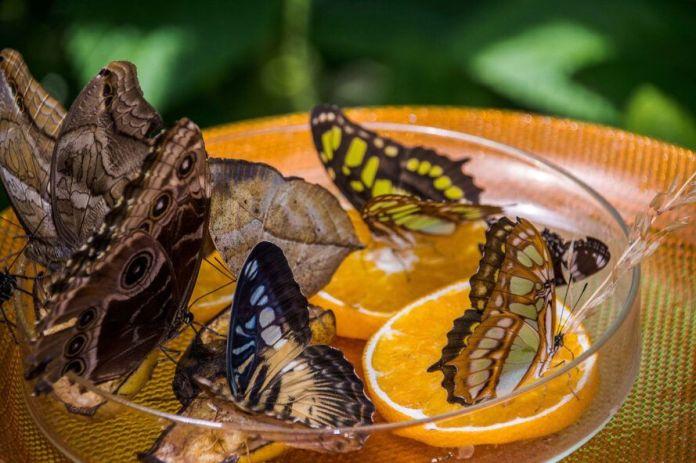 DIY butterfly feeder