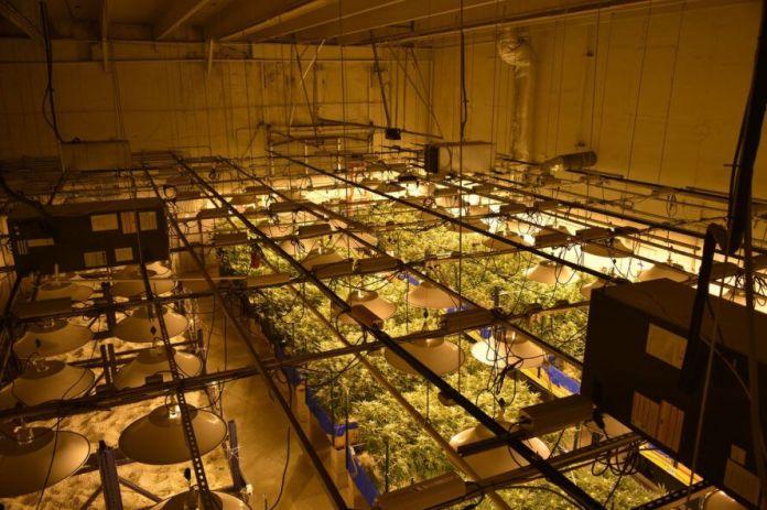 An indoor marijuana growth operation with arrays of indoor lighting and planters.