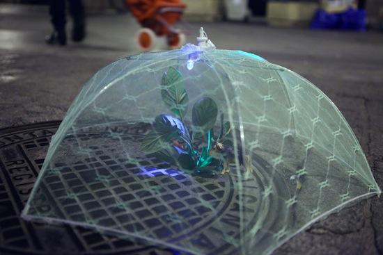Naturaleza Implantada de Luz Interruptus