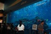 Nov 15 03_Dubai Mall-031