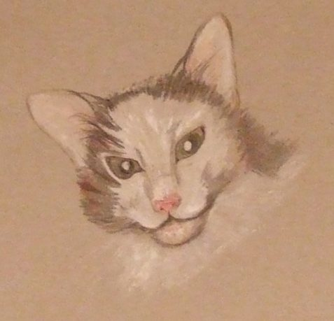 Pencil sketch of ornery faced cat