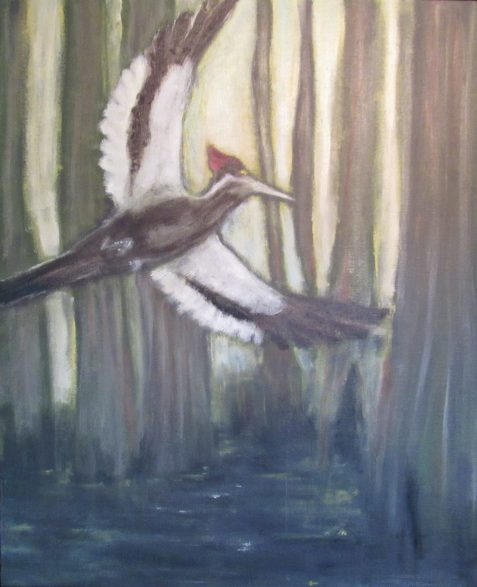 Oil painting of Ivory-billed Woodpecker flying in cypress swamp