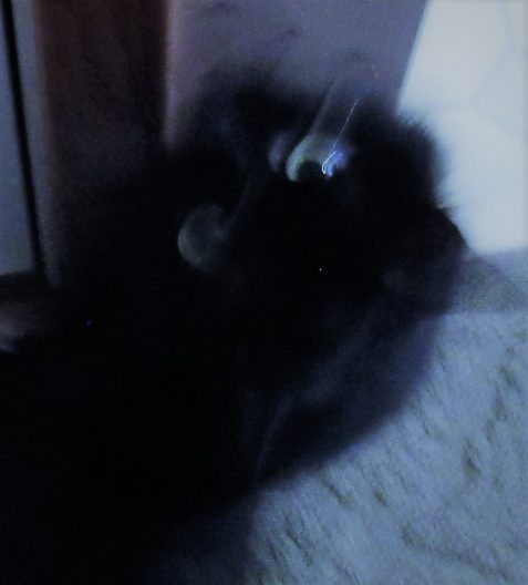 photo of black cat in blurred motion art for poem The Smell of the Crowd