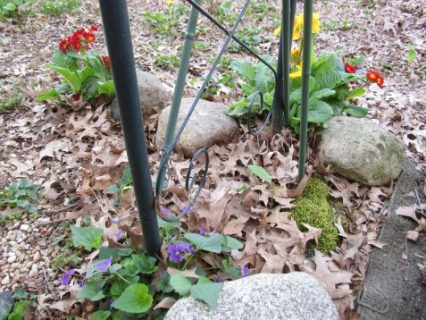 Photo of garden trellis with violets and primroses